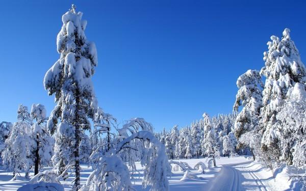 Скачать зимние wallpaper - лес