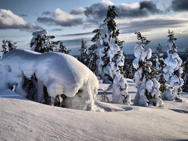 Снежные обои в Лапландии